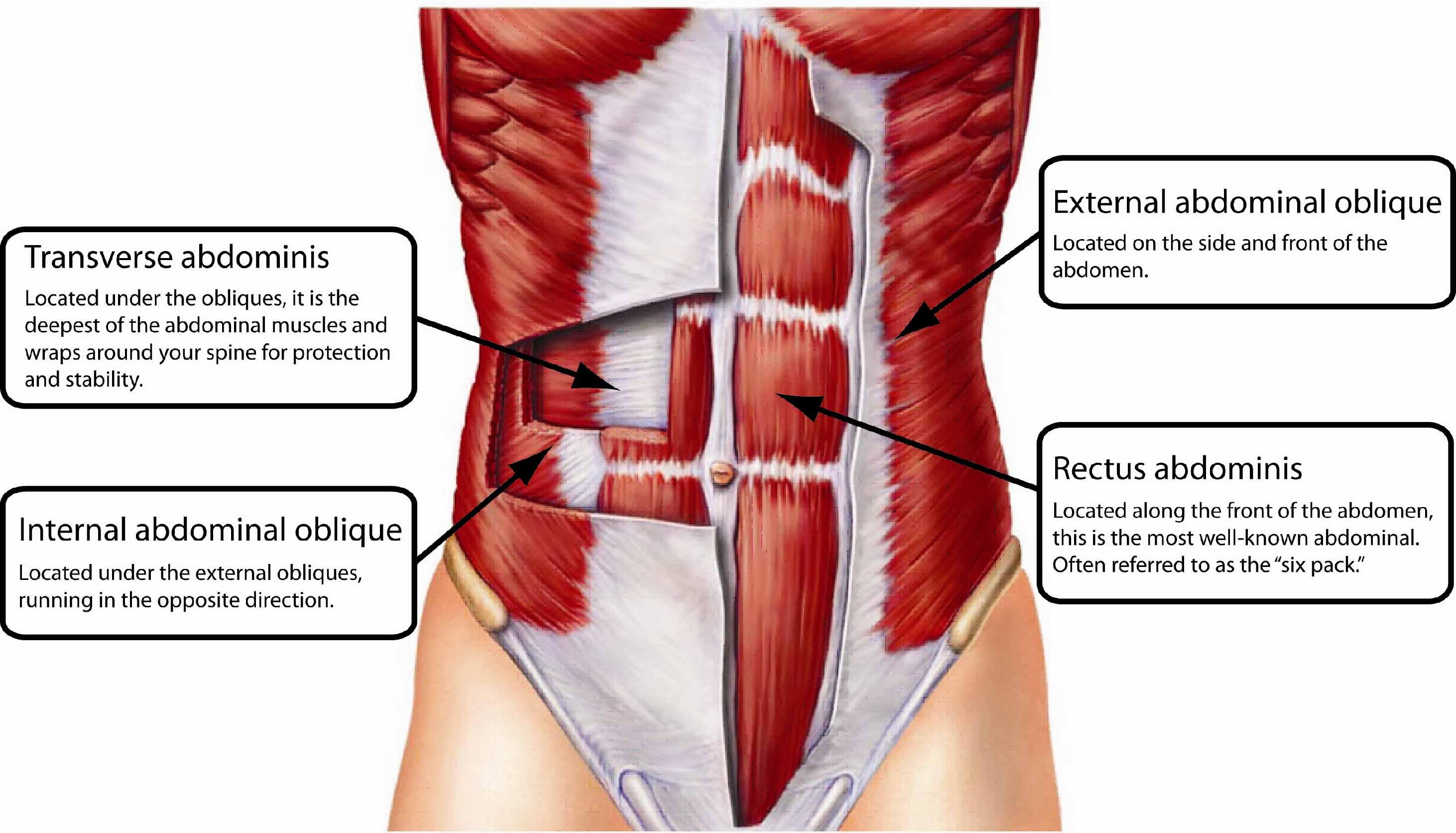 coremuscles