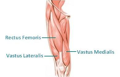 Quadriceps are a secondary mover along with your hamstrings that aid in the straigthening of the leg.
