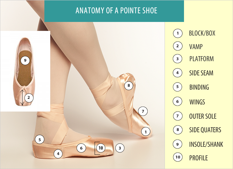 Pointe Shoe Parts Diagram Auto Electrical Wiring Diagram